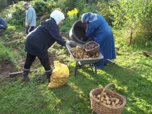 Kartoffelernte 022